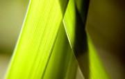 绿叶高清壁纸 第二集 壁纸10 绿叶高清壁纸(第二集 植物壁纸