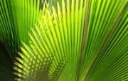 绿叶高清壁纸 第二集 壁纸26 绿叶高清壁纸(第二集 植物壁纸