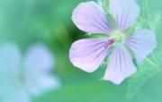 朦胧的花卉摄影宽屏壁纸 朦胧的花卉摄影宽屏壁纸 植物壁纸