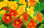 美丽的花儿世界漂亮壁纸 植物壁纸