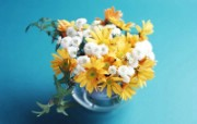 美丽鲜花特写 美丽鲜花特写 植物壁纸