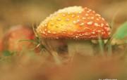 蘑菇特写壁纸 蘑菇特写壁纸 植物壁纸