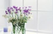 你的家中伴侣!室中花写真壁纸下 植物壁纸