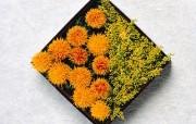 漂亮的插花艺术精美壁纸 植物壁纸