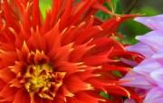 漂亮的花儿精美壁纸 植物壁纸