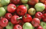 苹果写真 植物壁纸