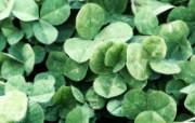 清新大自然 高清植物壁纸欣赏 清新大自然 高清植物壁纸欣赏 植物壁纸