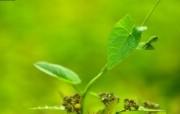 清新绿色植物壁纸 壁纸5 清新绿色植物壁纸 植物壁纸