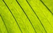 清新绿色植物壁纸 壁纸15 清新绿色植物壁纸 植物壁纸
