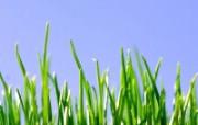 清新绿色植物壁纸 清新绿色植物壁纸 植物壁纸