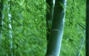 清幽雅致之青翠竹壁纸 植物壁纸