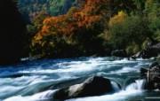秋色无限 森林里的秋天壁纸 秋色无限 森林里的秋天壁纸 植物壁纸