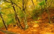 秋天摄影(黄色的感觉 植物壁纸