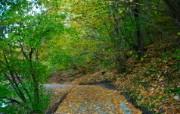 秋天摄影 黄色的感觉 宽屏壁纸 壁纸2 秋天摄影(黄色的感觉 植物壁纸