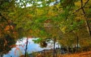 秋天摄影 黄色的感觉 宽屏壁纸 壁纸3 秋天摄影(黄色的感觉 植物壁纸