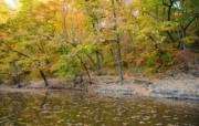 秋天摄影 黄色的感觉 宽屏壁纸 壁纸6 秋天摄影(黄色的感觉 植物壁纸