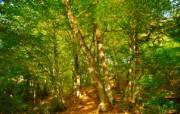 秋天摄影 黄色的感觉 宽屏壁纸 壁纸7 秋天摄影(黄色的感觉 植物壁纸