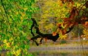 秋天摄影 黄色的感觉 宽屏壁纸 壁纸8 秋天摄影(黄色的感觉 植物壁纸
