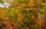秋天摄影 黄色的感觉 宽屏壁纸 壁纸9 秋天摄影(黄色的感觉 植物壁纸