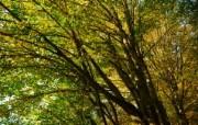 秋天摄影 黄色的感觉 宽屏壁纸 壁纸10 秋天摄影(黄色的感觉 植物壁纸