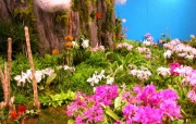 日本温室花卉精美壁纸 日本温室花卉精美壁纸 植物壁纸