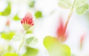 柔焦摄影 朦胧浪漫花卉壁纸 柔焦摄影 朦胧浪漫花卉壁纸 植物壁纸