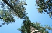 森林树木 植物壁纸