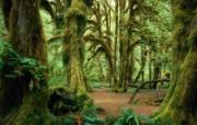 森林树木 森林树木 植物壁纸