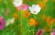 盛放的花朵高清宽屏壁 植物壁纸