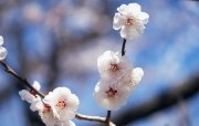 盛放的花朵高清宽屏壁纸 2560x1600 壁纸9 盛放的花朵高清宽屏壁 植物壁纸