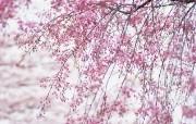盛放的花朵高清宽屏壁纸 2560x1600 壁纸11 盛放的花朵高清宽屏壁 植物壁纸