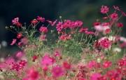 盛放的花朵高清宽屏壁纸 2560x1600 壁纸12 盛放的花朵高清宽屏壁 植物壁纸