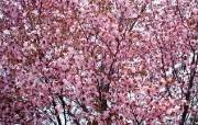 盛放的花朵高清宽屏壁纸 2560x1600 壁纸13 盛放的花朵高清宽屏壁 植物壁纸