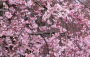 盛放的花朵高清宽屏壁纸 2560x1600 壁纸14 盛放的花朵高清宽屏壁 植物壁纸