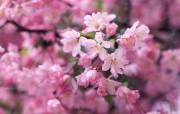 盛放的花朵高清宽屏壁纸 2560x1600 壁纸20 盛放的花朵高清宽屏壁 植物壁纸