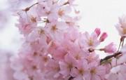 盛放的花朵高清宽屏壁纸 2560x1600 壁纸21 盛放的花朵高清宽屏壁 植物壁纸