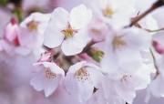 盛放的花朵高清宽屏壁纸 2560x1600 壁纸22 盛放的花朵高清宽屏壁 植物壁纸