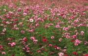 盛放的花朵高清宽屏壁纸 2560x1600 壁纸23 盛放的花朵高清宽屏壁 植物壁纸