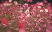盛放的花朵高清宽屏壁纸 2560x1600 壁纸24 盛放的花朵高清宽屏壁 植物壁纸