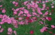 盛放的花朵高清宽屏壁纸 2560x1600 壁纸25 盛放的花朵高清宽屏壁 植物壁纸