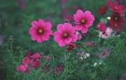 盛放的花朵高清宽屏壁纸 2560x1600 壁纸27 盛放的花朵高清宽屏壁 植物壁纸