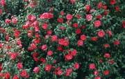 盛放的花朵高清宽屏壁纸 2560x1600 壁纸29 盛放的花朵高清宽屏壁 植物壁纸