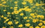 盛放的花朵高清宽屏壁纸 2560x1600 壁纸30 盛放的花朵高清宽屏壁 植物壁纸