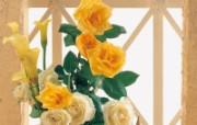 生活色彩点缀 花儿朵朵 生活色彩点缀 花儿朵朵 植物壁纸