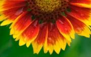 盛开鲜花 高清宽屏壁纸 植物壁纸