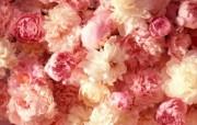 盛开鲜花 高清宽屏壁纸 盛开鲜花 高清宽屏壁纸 植物壁纸