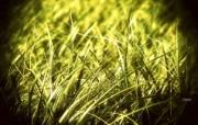 生态植物花朵风光壁纸 生态植物花朵风光壁纸 植物壁纸