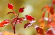 推荐!浓浓秋之韵精美壁纸 植物壁纸