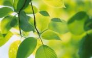 VISTA植物特写 VISTA植物特写 植物壁纸