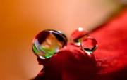 微距摄影鲜花与水珠壁纸 壁纸7 微距摄影鲜花与水珠壁 植物壁纸